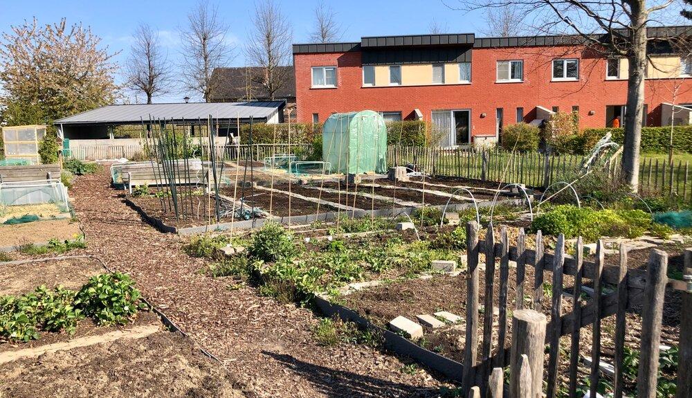 De oogst is begonnen in samentuin Bilzen